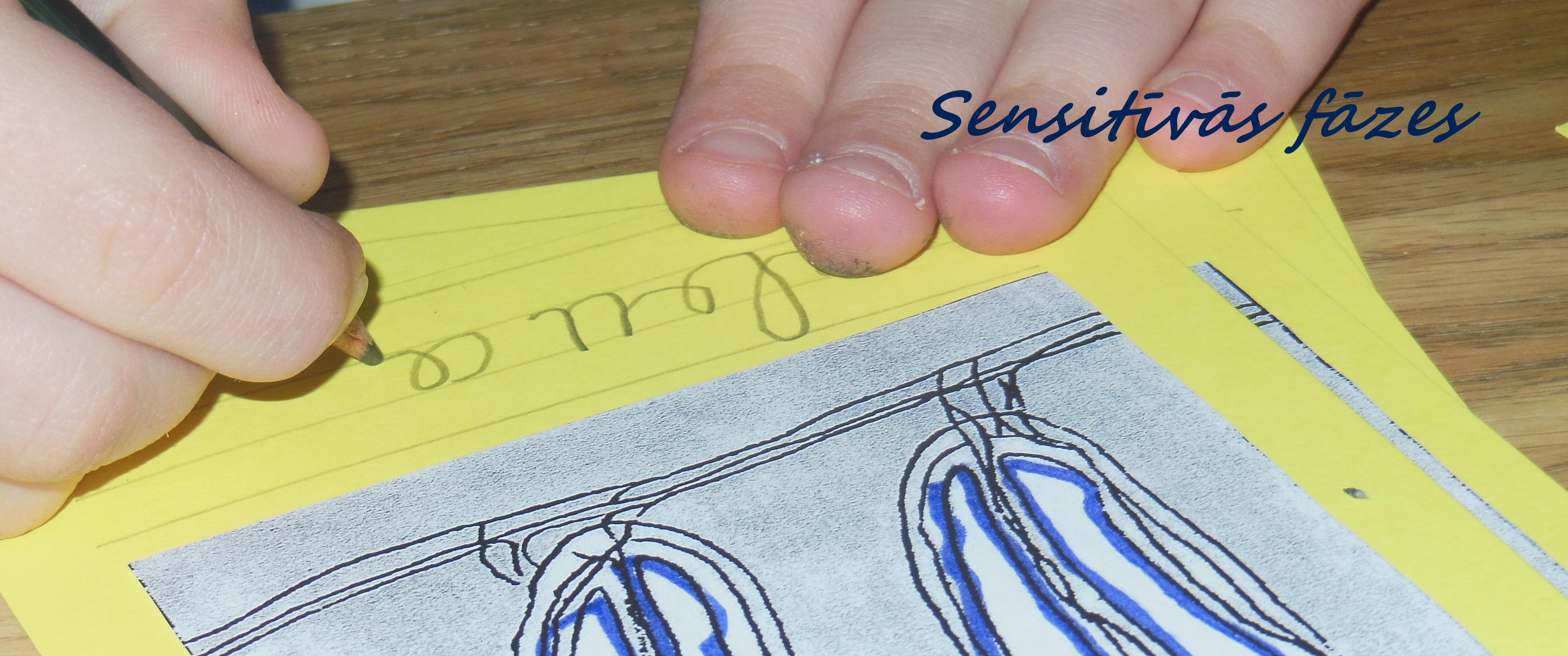 Sensitīvās fāzes Montessori pedagoģijā